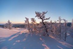 Foresta di inverno sotto neve sul tramonto Fotografie Stock