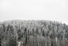 Foresta di inverno su una collina Fotografia Stock Libera da Diritti