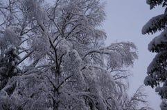 Foresta di inverno in Vologda immagini stock