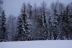 Foresta di inverno in Vologda immagine stock libera da diritti