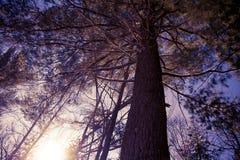 Foresta di inverno in Wisconsin Immagini Stock
