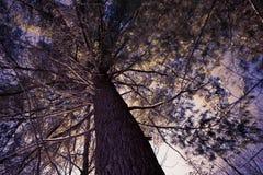 Foresta di inverno in Wisconsin Fotografia Stock Libera da Diritti