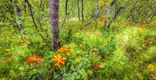 Foresta di Islandic Immagine Stock Libera da Diritti