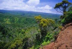 Foresta di Koke'e, Kauai Fotografia Stock Libera da Diritti