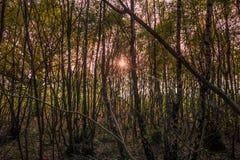 Foresta di lavoro Fotografia Stock