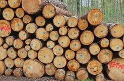 Foresta di legno di connessione su fondo Immagini Stock Libere da Diritti