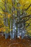 Foresta di legno duro con le foglie cadute sulla terra Foresta densa Fotografie Stock Libere da Diritti