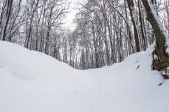 Foresta di mattina Fotografia Stock