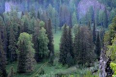 Foresta di mattina dalla cima della scogliera al dymkoj di schiarimento della strada Fotografia Stock Libera da Diritti