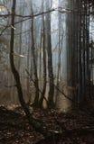 Foresta di mattina nel tempo di primavera Fotografie Stock Libere da Diritti