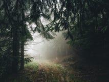 Foresta di Mistic Fotografia Stock Libera da Diritti