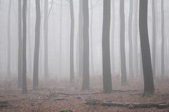 Foresta di Misty European con i gambi dell'albero fotografie stock