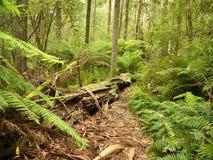 Foresta di Mt Dandenong Fotografia Stock