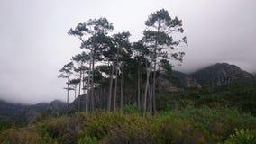 Foresta di Newlands Fotografie Stock Libere da Diritti