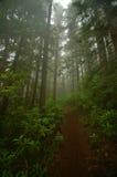 Foresta di nord-ovest pacifica Immagine Stock