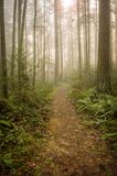 Foresta di nord-ovest pacifica su una mattina nebbiosa Fotografie Stock Libere da Diritti