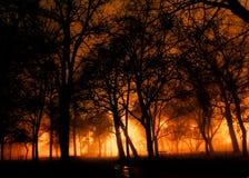 Foresta di notte Fotografie Stock