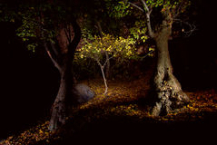 Foresta di notte immagini stock libere da diritti