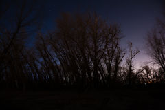 Foresta di notte Immagine Stock Libera da Diritti
