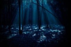Foresta di notte Fotografie Stock Libere da Diritti