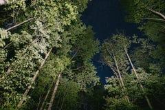 Foresta di notte e cielo stellato immagine stock libera da diritti