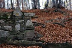 Foresta di novembre Fotografia Stock