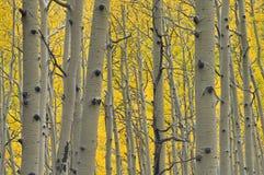 Foresta di oro Fotografie Stock