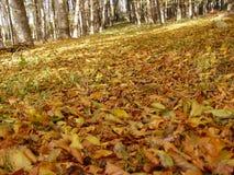 foresta di ottobre fotografia stock