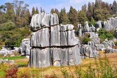 Foresta di pietra Fotografie Stock