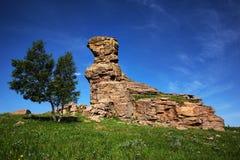 Foresta di pietra del pascolo Fotografie Stock