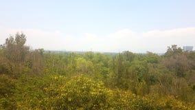 Foresta di planta del parco del parque di Vegetacion Fotografia Stock