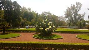 Foresta di planta del patk del parque di Vegetacion Immagini Stock