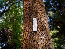 Foresta di riscaldamento globale Fotografia Stock