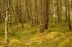 Foresta di Rothiemurchus fotografie stock