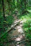 Foresta di Saraburee Fotografia Stock Libera da Diritti