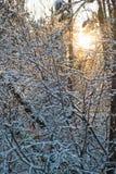 Foresta di sera Fotografia Stock