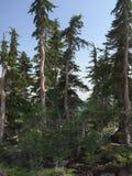 Foresta di Shasta del supporto Fotografia Stock