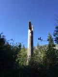 Foresta di Shasta del supporto Immagini Stock