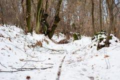 Foresta di Snowy Immagine Stock Libera da Diritti