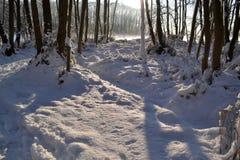 Foresta di Snowy. Fotografia Stock