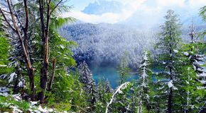 Foresta di Snowy Immagine Stock