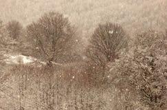 Foresta di Snowy Fotografie Stock Libere da Diritti
