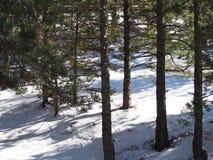 Foresta di Snowy fotografia stock