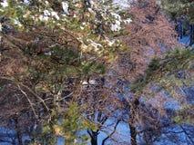 Foresta di Snowy fotografie stock