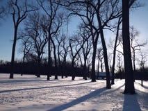 Foresta di Snowy fotografia stock libera da diritti