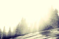 Foresta di Snowy con i raggi di sole Immagine Stock