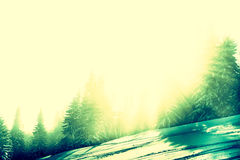 Foresta di Snowy con i raggi di sole Fotografia Stock Libera da Diritti