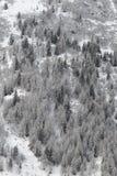 Foresta di Snowy in Francia Immagine Stock Libera da Diritti