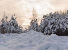 Foresta di Snowy sui precedenti di alba immagine stock libera da diritti