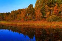 Foresta di Sunrize Immagine Stock